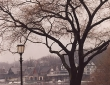 LAMP LIGHT AND TREE Philadelphia © ARMOND SCAVO