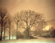 MUSEUM TREE Philadelphia @ Armond Scavo