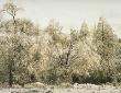 ICE STORM #2 Philadelphia © ARMOND SCAVO