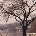 Lamp Light and Boat House Row -Fine Art Photograph